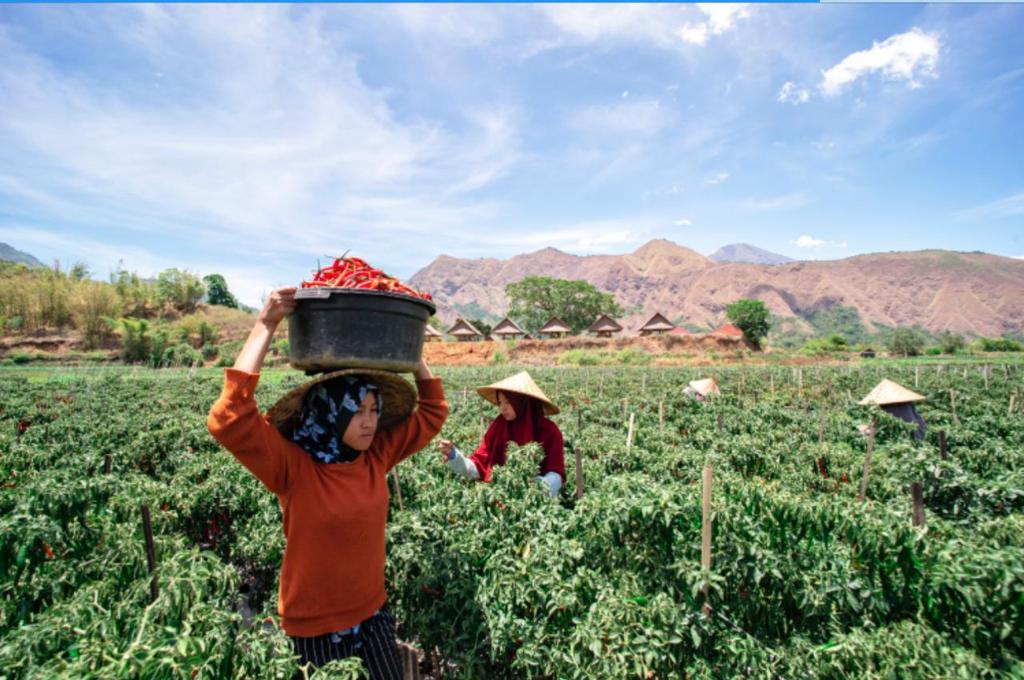 Dalam 6 Bulan BRI Salurkan KUR Rp84,87 Triliun, 31 Persen di Sektor Pertanian